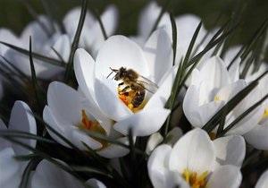 Новости науки: Пестициды ухудшают умственные способности пчел - ученые