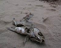 В речке под Киевом обнаружено 8 тонн мертвой рыбы