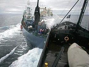 В Антарктике судно экологов протаранило японский китобой