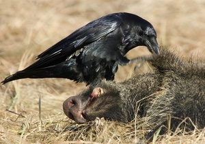 В Черкасской области задержали группу браконьеров