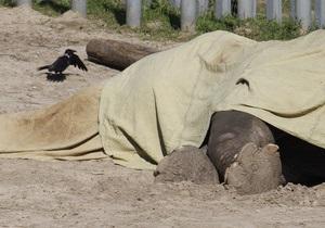 Киевские власти прогнозируют, что причины смерти слона Боя будут установлены в конце мая