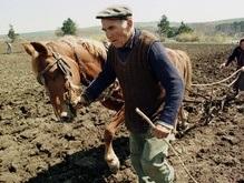 Тимошенко намерена поддерживать аграриев по адресным схемам
