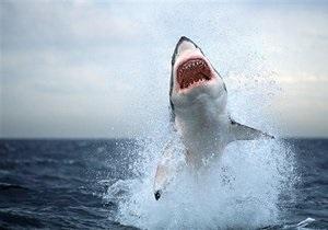 У побережья Флориды акула напала на серфингиста: жертва скончалась от полученных ран
