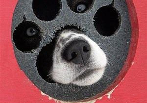 В Венгрии ураган унес собаку вместе с ее будкой на 32 километра