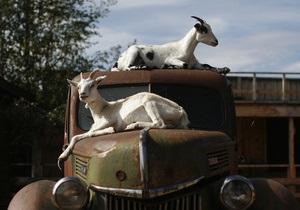 В японских парках козы будут уничтожать сорняки