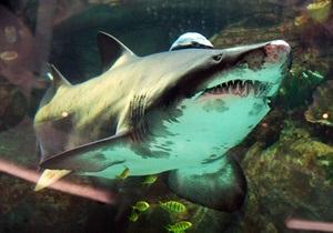 Фотогалерея: Рыбный день. Акция в защиту акулы в ТРЦ Ocean Plaza