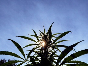 В одном из американских штатов разрешили курение марихуаны