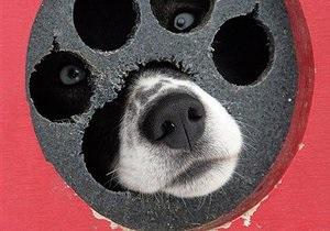 Сотрудники Киевводоканала вытащили из водопроводного люка собаку