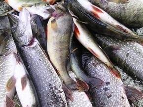 Рыба перекрыла шоссе на востоке Китая