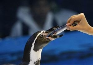 Австралийский суд признал двух британцев виновными в краже пингвина