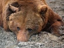 Трагедия в Николаевском зоопарке: новые подробности