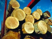 Львовские чиновники помогли незаконно вывезти лесоматериалы почти на 1 млн грн