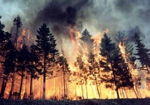 В России горят сибирские леса