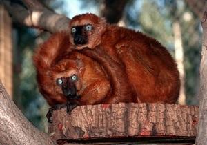 Ученые составили список приматов, которые находятся на грани вымирания
