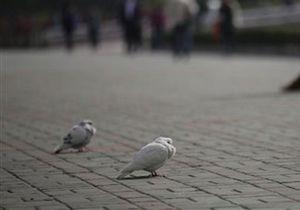 Новости Великобритании: В Англии находят сотни мертвых птиц