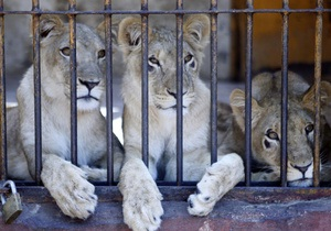 Одесский зоопарк предложил всем желающим взять под опеку любое животное