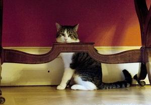 Кота премьер-министра Британии уволили из-за нежелания ловить мышей