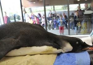Ученые полагают, что отправленный из Новой Зеландии в Антарктиду пингвин погиб