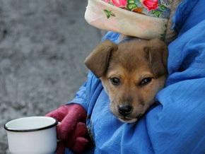 В Киеве бездомных собак опять могут начать усыплять