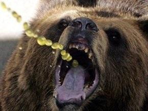На Камчатке медведь убил женщину