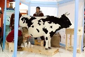 Чудо-корова накормит пломбиром жителей Одессы