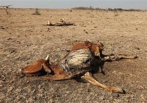 Экологи опасаются надвигающегося массового вымирания млекопитающих на Земле