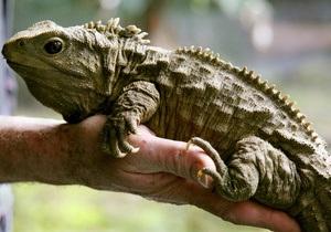 Новозеландские ученые узнали, как жует древняя рептилия