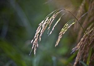 Кабмину предлагают отменить квоты на экспорт ячменя и пшеницы