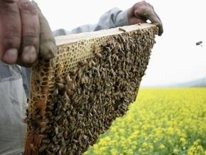 С британской королевской пасеки украли полмиллиона пчел