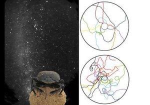 Жуки-скарабеи умеют ориентироваться по Млечному пути