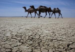 В Казахстане наркоман на грузовике задавил 15 верблюдов, приняв их за злых духов