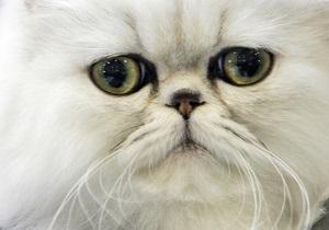 В итальянском городе бездомным котам предоставят больше прав