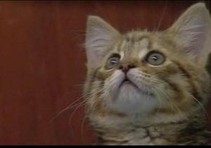В Шотландии котенок выжил после того, как провел час в работающей стиральной машине