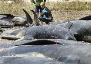 В Новой Зеландии 125 китов совершили массовое самоубийство