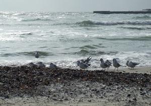 В Аркадии в море попали канализационные стоки