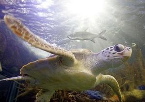 Киевский зоопарк опроверг информацию о строительстве океанариума