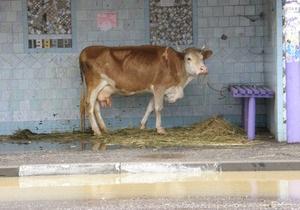 В Херсонской и Днепропетровской областях подтоплены почти 500 дворов