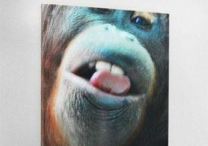 Работы знаменитой обезьяны-фотографа выставлены на аукцион