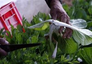 Ведомство Бродского хочет ввести фиксированный налог для производителей, выращивающих продукцию в теплицах