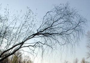 В Запорожье 68-летний пенсионер просидел на дереве почти всю ночь