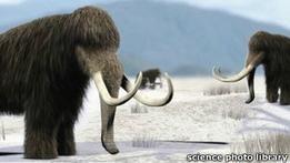Ученые из России и Кореи будут клонировать мамонта