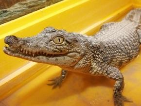 В одесском пруду завелись крокодилы