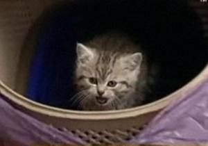Сюжет о котенке Ющенко не пустили в телеэфир