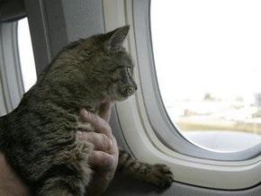 Грипп А/H1N1 впервые выявили у кота