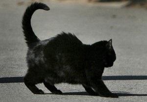 В Сумской области от укусов бешеного кота пострадали шесть человек