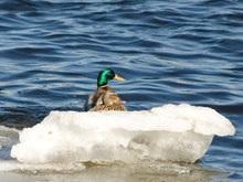 В Николаеве двух подростков унесло на льдине