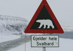 Норвежец врезался в медведя, пытаясь избежать столкновения с лосем