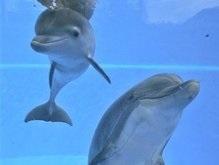 Правительство Новой Зеландии озабочено массовой гибелью дельфинов