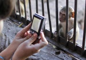 Власти Ялты призывают отдыхающих не фотографироваться с животными и птицами