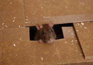 В Нью-Йорке проходит конкурс на фото самой страшной крысы подземки